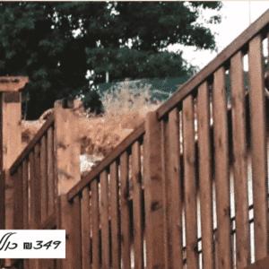 גדר להסתרה חלקית